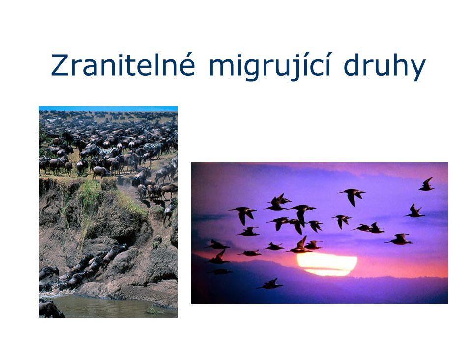Zranitelné migrující druhy