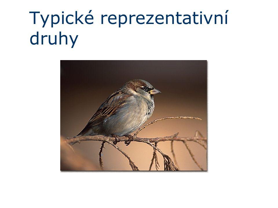 Typické reprezentativní druhy