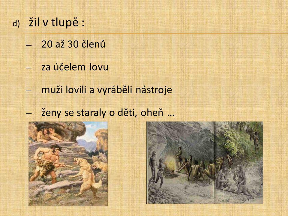 d) žil v tlupě : ― 20 až 30 členů ― za účelem lovu ― muži lovili a vyráběli nástroje ― ženy se staraly o děti, oheň …