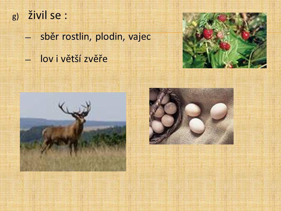 g) živil se : ― sběr rostlin, plodin, vajec ― lov i větší zvěře