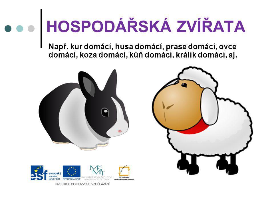 HOSPODÁŘSKÁ ZVÍŘATA Např. kur domácí, husa domácí, prase domácí, ovce domácí, koza domácí, kůň domácí, králík domácí, aj.