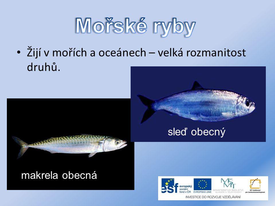 Žijí v mořích a oceánech – velká rozmanitost druhů. makrela obecná sleď obecný