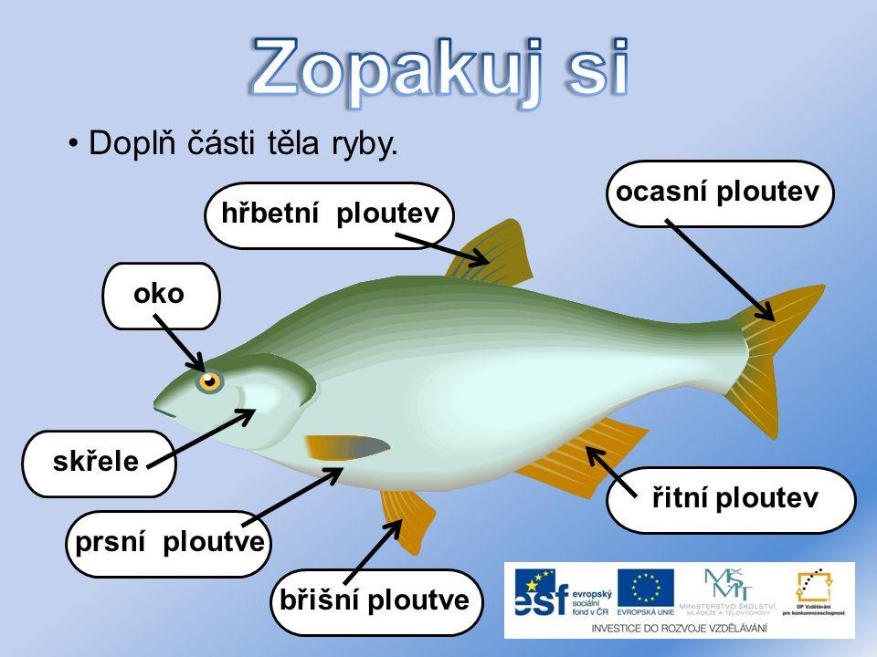 Doplň části těla ryby. hřbetní ploutev oko skřele prsní ploutve břišní ploutve řitní ploutev ocasní ploutev