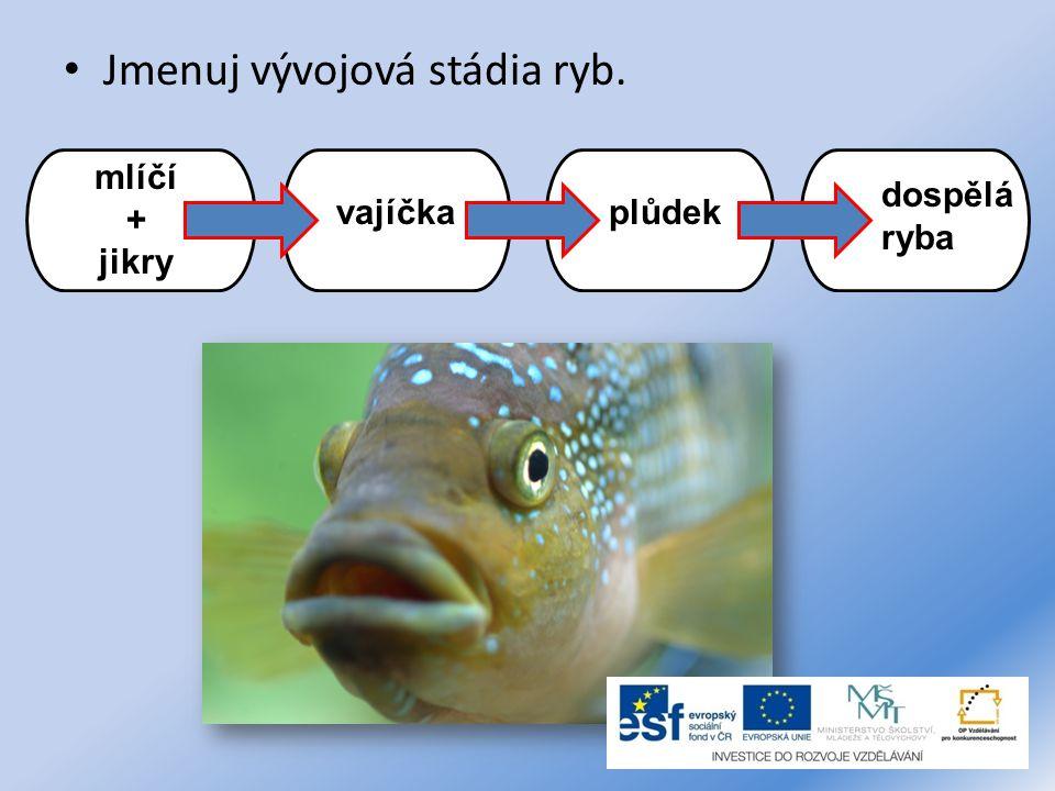 Jmenuj vývojová stádia ryb. mlíčí + jikry vajíčkaplůdek dospělá ryba