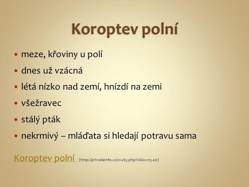 http://www.myfunnypets.net/wp-content/uploads/2010/09/field-mouse_10.jpg Hraboš polní