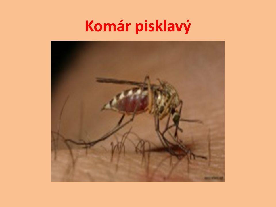 http://www.skudci.com/octomilka-obecna http://cs.wikipedia.org/wiki/Octomilka http://www.vivo.sk/photo/146030/Bzucivka- Zelena J.