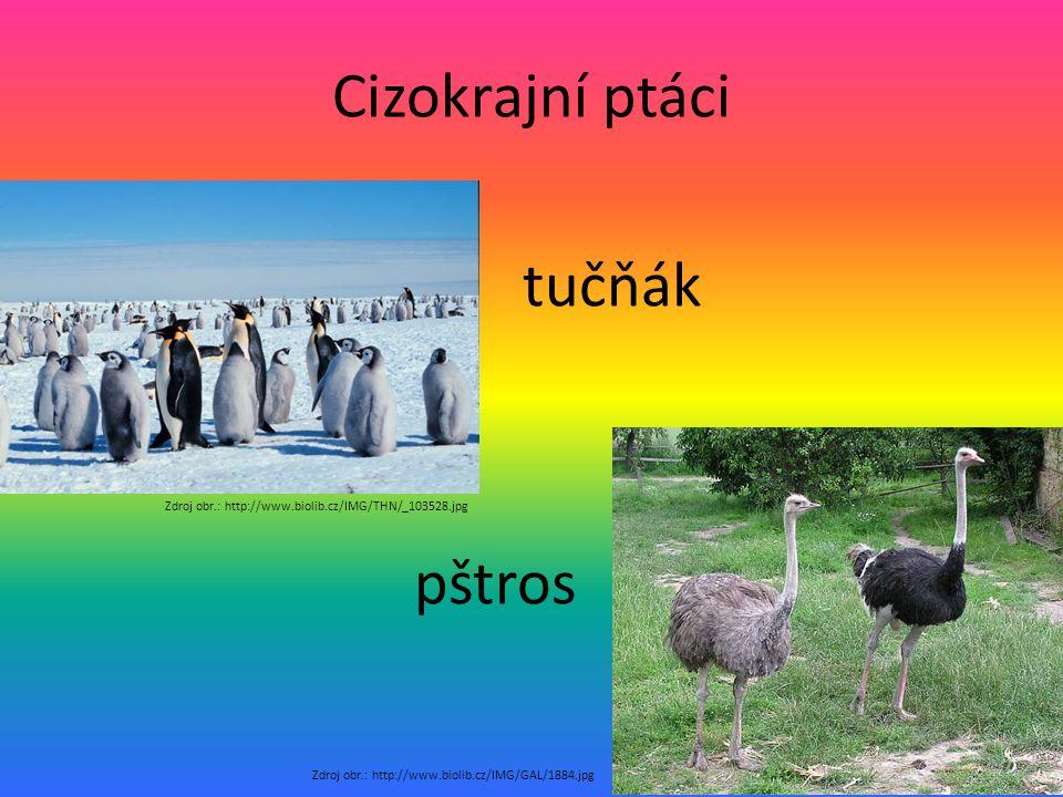 Cizokrajní ptáci tučňák pštros Zdroj obr.: http://www.biolib.cz/IMG/GAL/1884.jpg Zdroj obr.: http://www.biolib.cz/IMG/THN/_103528.jpg