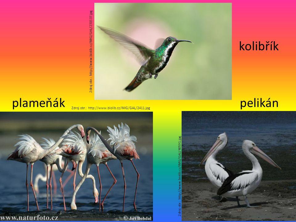kolibřík plameňák pelikán Zdroj obr.: http://www.biolib.cz/IMG/GAL/231537.jpg Zdroj obr.: http://www.biolib.cz/IMG/GAL/2411.jpg Zdroj obr.: http://www.biolib.cz/IMG/GAL/40591.jpg