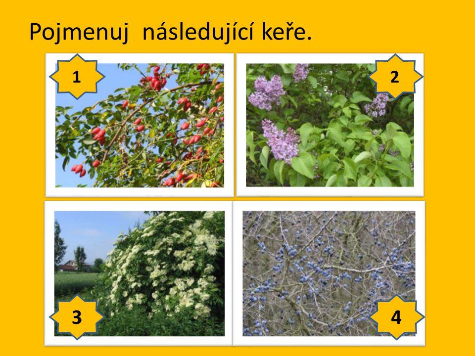 Pojmenuj následující stromy. 1 2 3 4