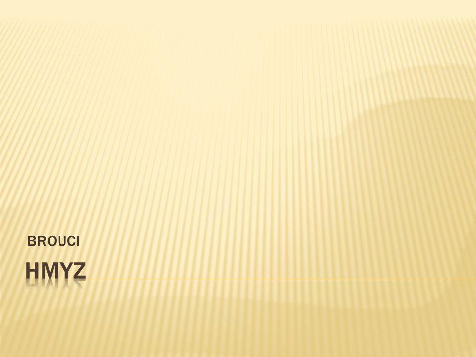 č lánkované t ě lo (hlava, hru ď, zade č ek)  1 pár tykadel  složené o č i  ústní ústrojí sací, lízací, kousací, bodav ě sací  2 páry k ř ídel  3 páry č lánkovaných kon č etin