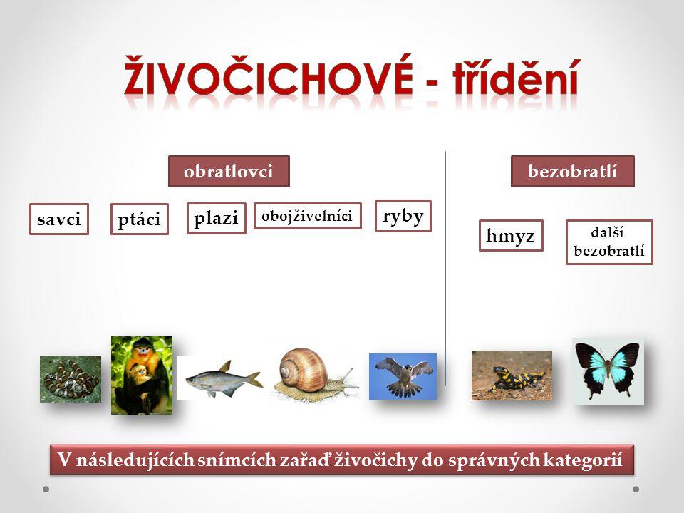 obratlovcibezobratlí savciptáci plazi obojživelníci ryby hmyz další bezobratlí V následujících snímcích zařaď živočichy do správných kategorií