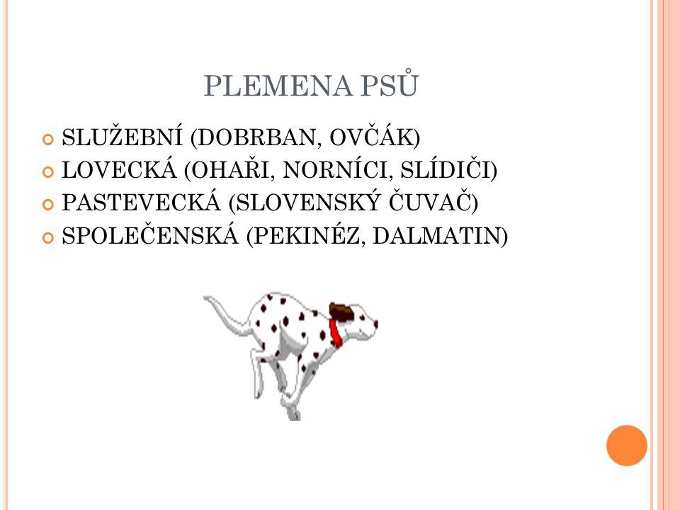 PLEMENA PSŮ SLUŽEBNÍ (DOBRBAN, OVČÁK) LOVECKÁ (OHAŘI, NORNÍCI, SLÍDIČI) PASTEVECKÁ (SLOVENSKÝ ČUVAČ) SPOLEČENSKÁ (PEKINÉZ, DALMATIN)