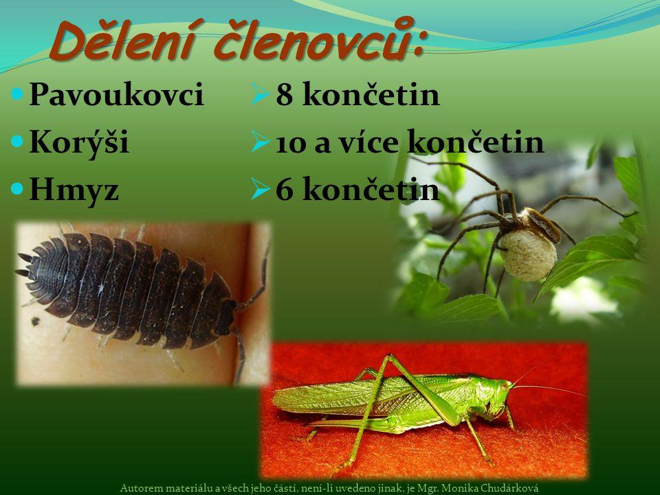 Pavoukovci Korýši Hmyz Dělení členovců:  8 končetin  10 a více končetin  6 končetin Autorem materiálu a všech jeho částí, není-li uvedeno jinak, je