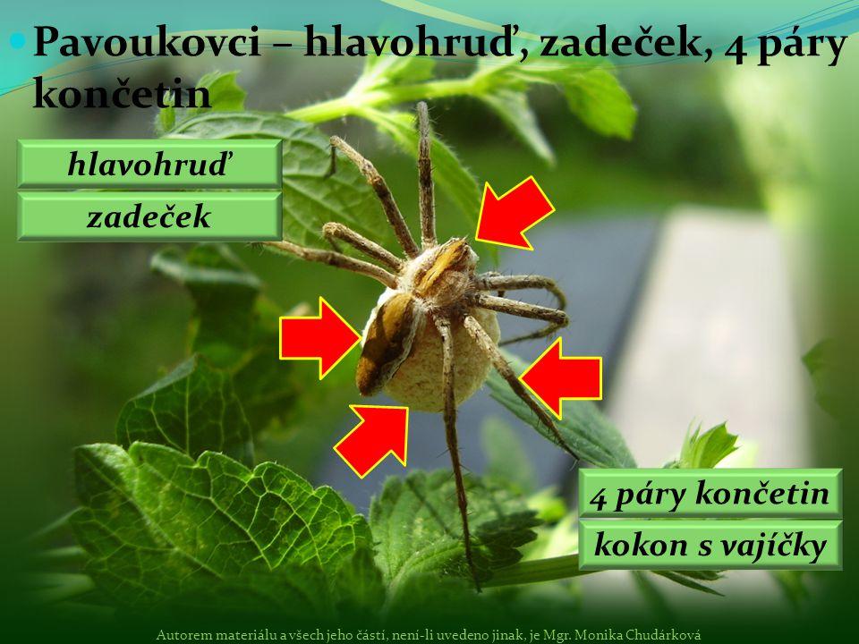 Pavouci (křižák obecný) Sekáči (sekáč rohatý) Roztoči (klíště obecné, rozkladači, drobní predátoři) Pavoukovci: Autorem materiálu a všech jeho částí, není-li uvedeno jinak, je Mgr.