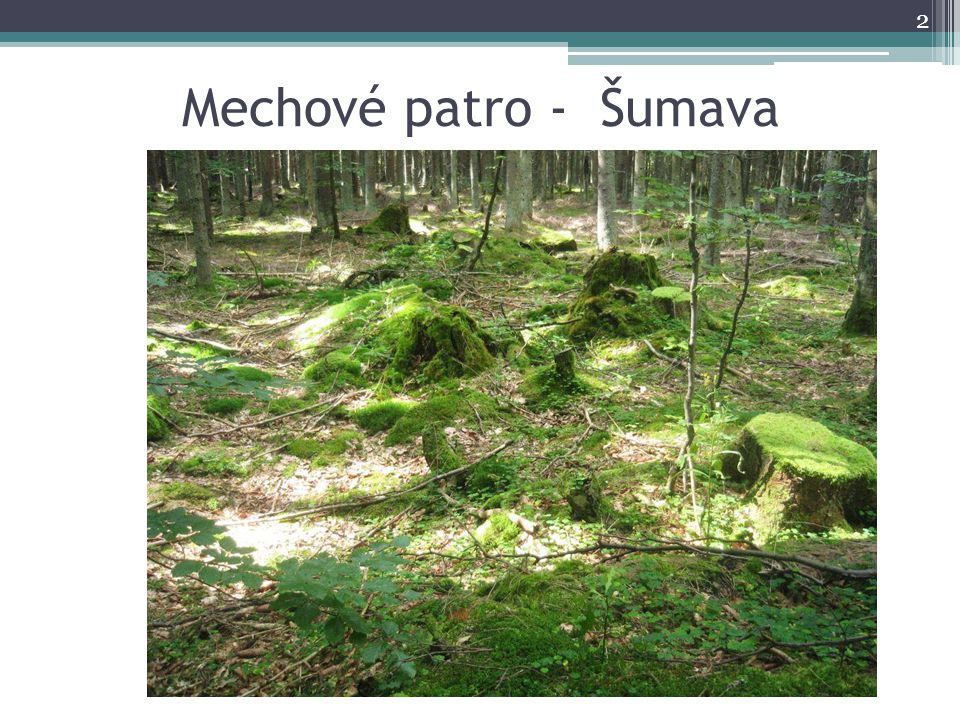Mechové patro - Šumava 2