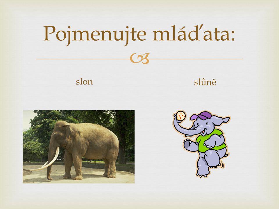 Pojmenujte mláďata: slon slůně