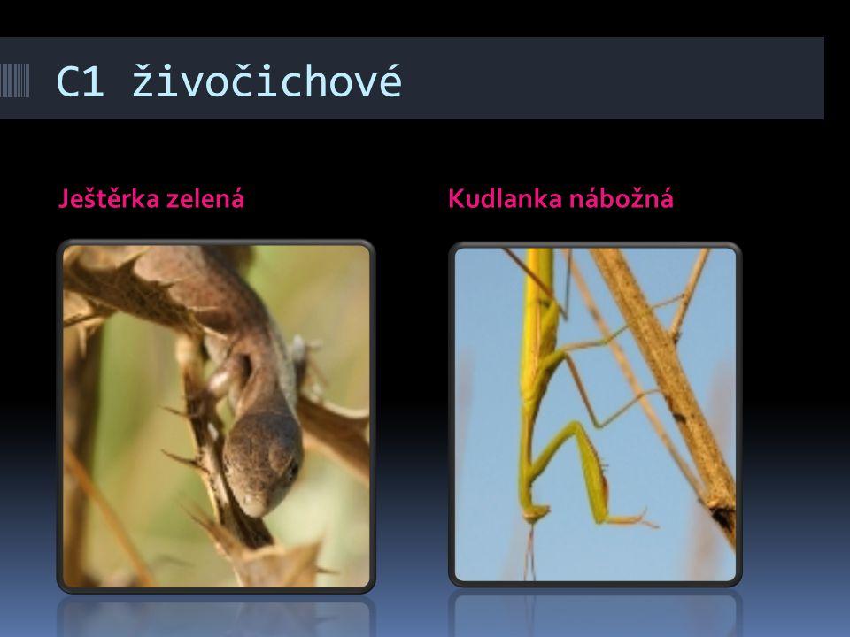C1 živočichové Ještěrka zelenáKudlanka nábožná
