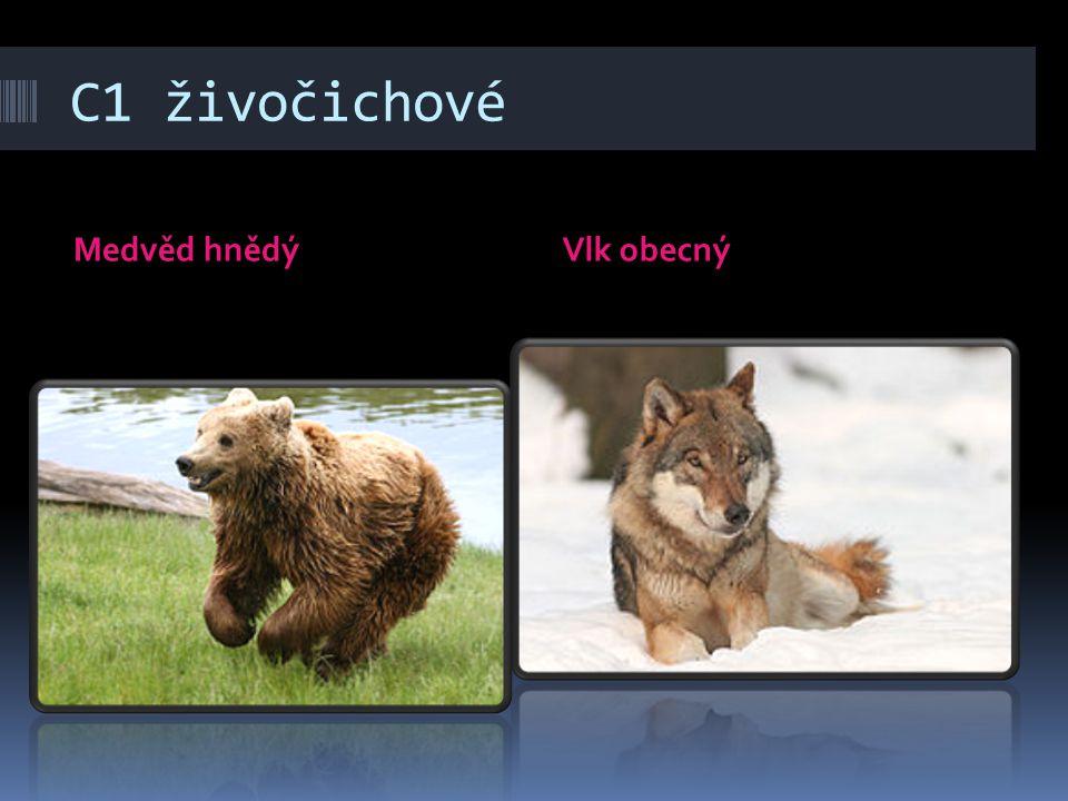 C1 živočichové Medvěd hnědýVlk obecný