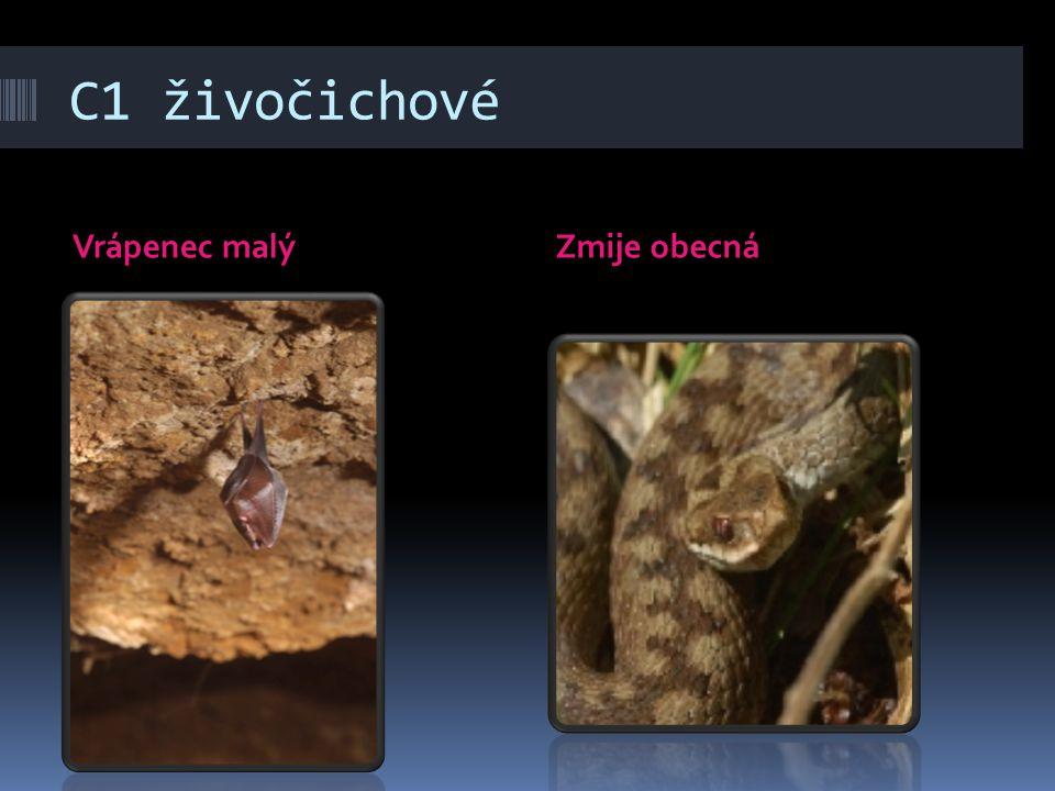 C1 živočichové Vrápenec malýZmije obecná