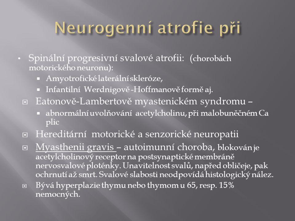  Svalové dystrofie: většinou kongenitální choroby, primární porucha je svalová  Duchenova a Beckerova svalová dystrofie – na X vázaná chybění dystrofinu, slabost lýtkových svalů, kde lipomatózní, atrofie.