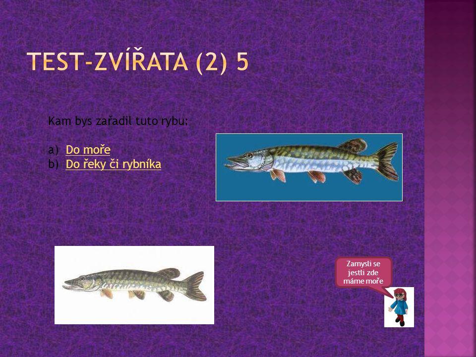 Zamysli se jestli zde máme moře Kam bys zařadil tuto rybu: a)Do mořeDo moře b)Do řeky či rybníkaDo řeky či rybníka