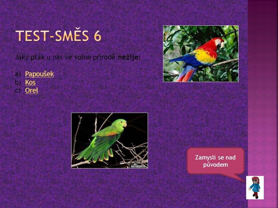 Zamysli se nad původem Jaký pták u nás ve volné přírodě nežije: a)PapoušekPapoušek b)KosKos c)OrelOrel