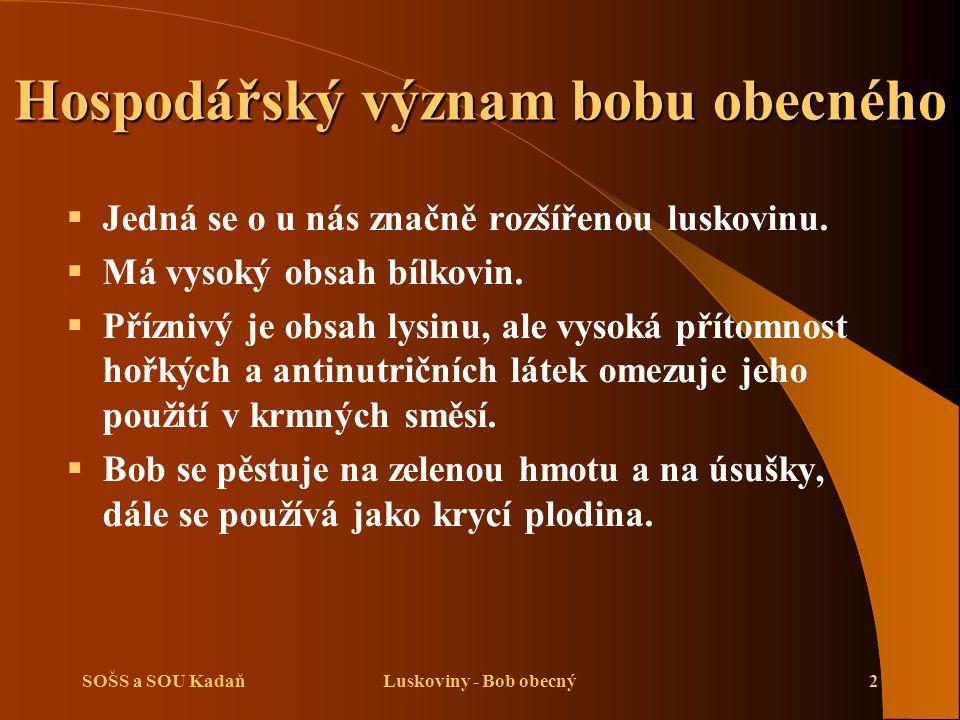 SOŠS a SOU KadaňLuskoviny - Bob obecný3 Biologická charakteristika bobu obecného   Jednoletá plodina s dlouhou vegetační dobou.