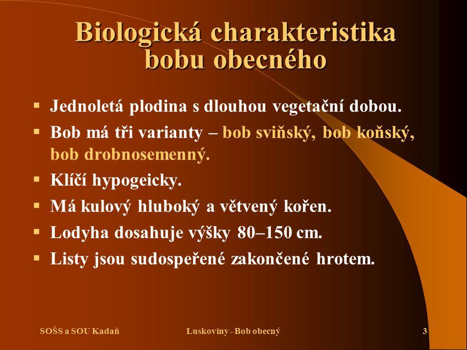 SOŠS a SOU KadaňLuskoviny - Bob obecný3 Biologická charakteristika bobu obecného   Jednoletá plodina s dlouhou vegetační dobou.   Bob má tři varia