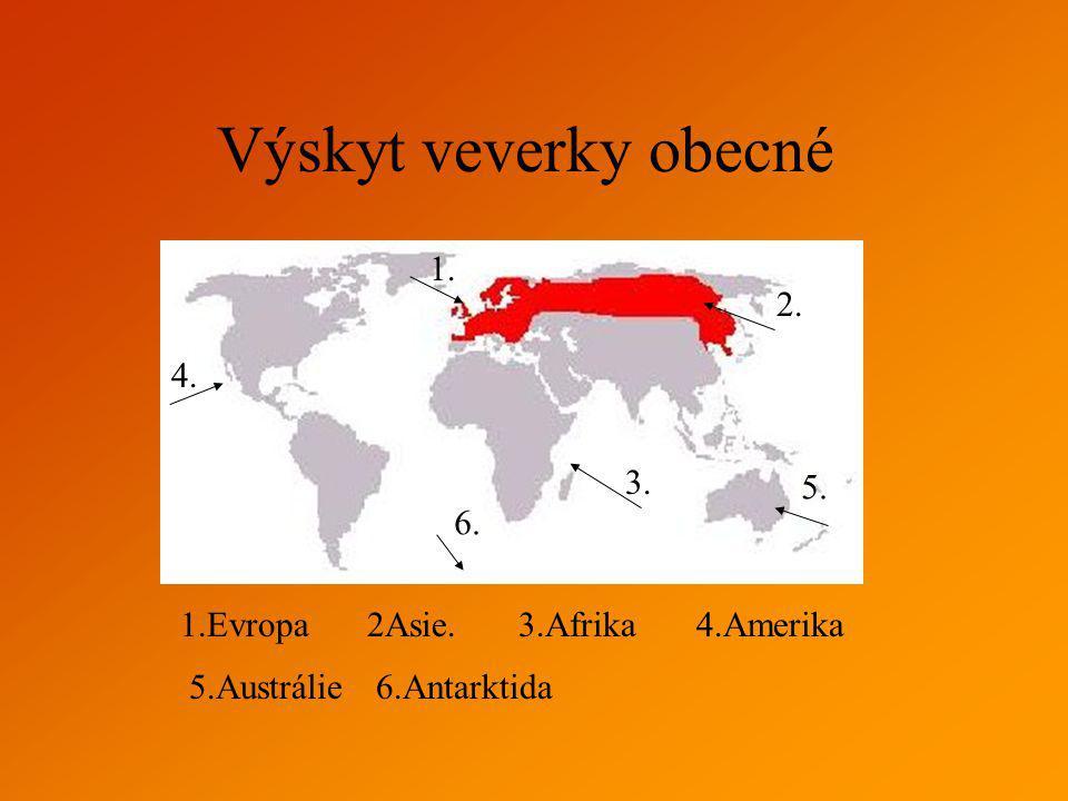 3. 4. 1. 2. 1.Evropa2Asie.3.Afrika4.Amerika Výskyt veverky obecné 5. 5.Austrálie 6. 6.Antarktida