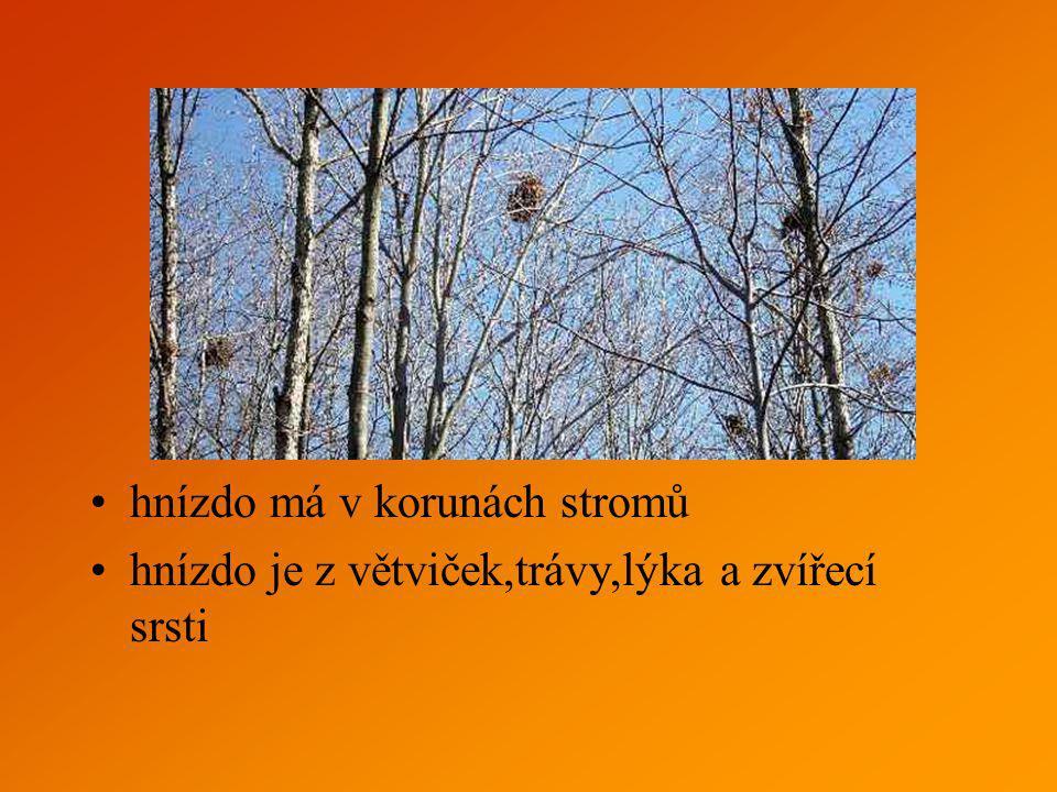hnízdo má v korunách stromů hnízdo je z větviček,trávy,lýka a zvířecí srsti