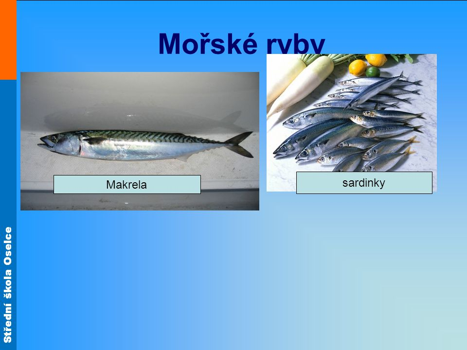 Střední škola Oselce Mořské ryby Makrela sardinky
