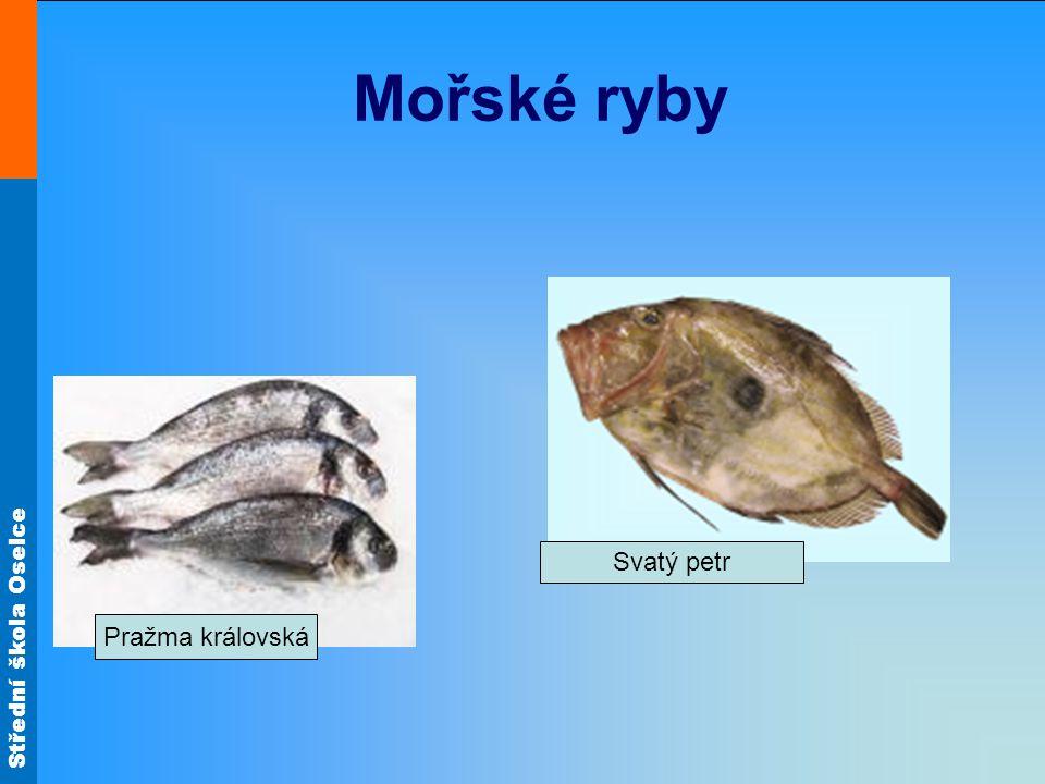 Střední škola Oselce Mořské ryby Svatý petr Pražma královská