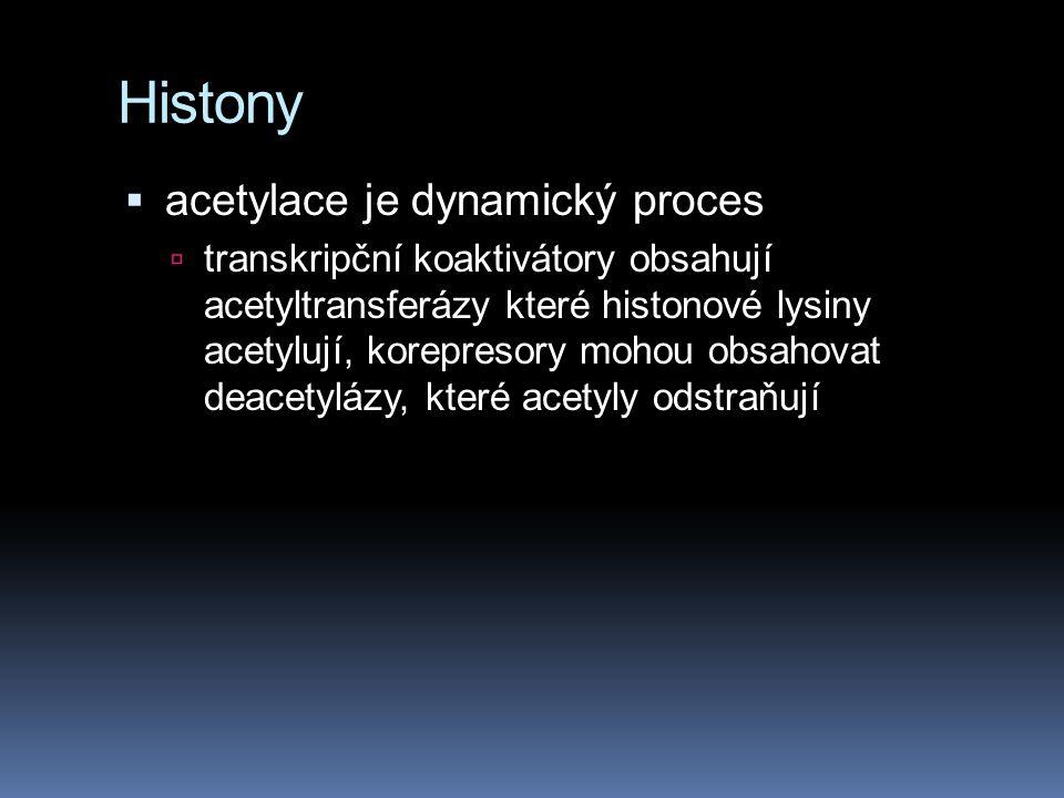 Histony  acetylace je dynamický proces  transkripční koaktivátory obsahují acetyltransferázy které histonové lysiny acetylují, korepresory mohou obs