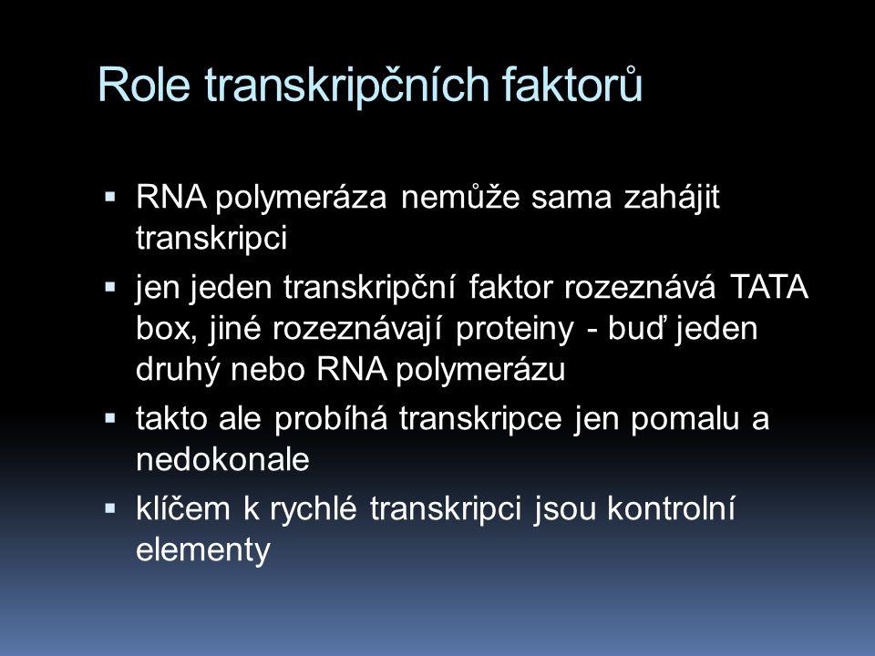 Role transkripčních faktorů  RNA polymeráza nemůže sama zahájit transkripci  jen jeden transkripční faktor rozeznává TATA box, jiné rozeznávají prot