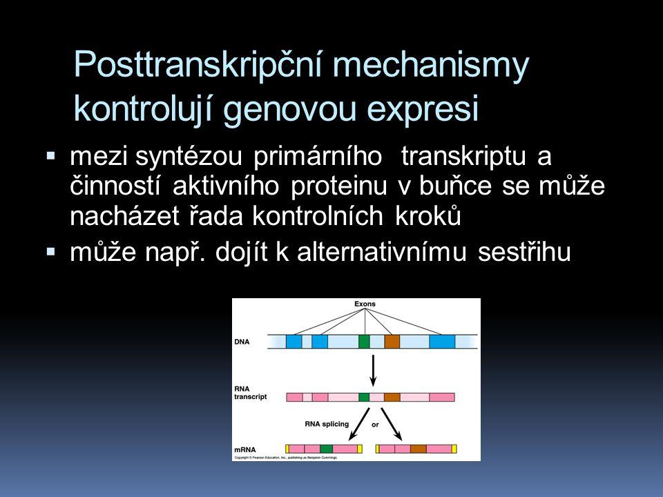 Posttranskripční mechanismy kontrolují genovou expresi  mezi syntézou primárního transkriptu a činností aktivního proteinu v buňce se může nacházet ř