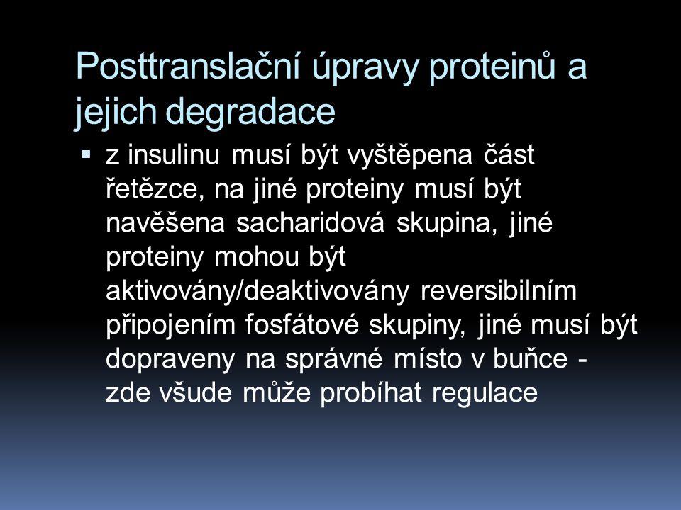 Posttranslační úpravy proteinů a jejich degradace  z insulinu musí být vyštěpena část řetězce, na jiné proteiny musí být navěšena sacharidová skupina
