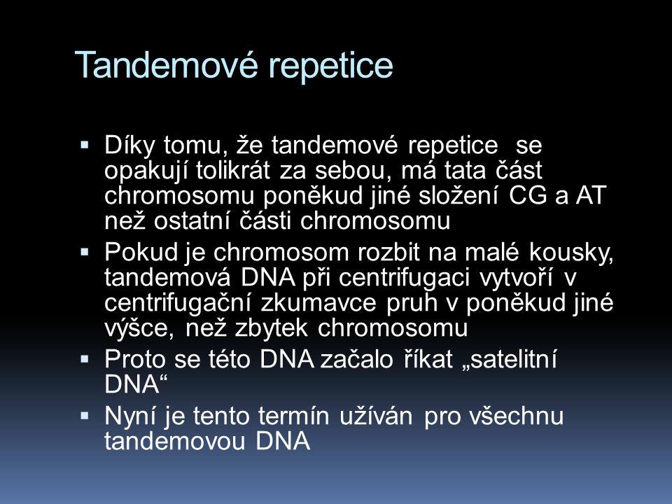 Tandemové repetice  Díky tomu, že tandemové repetice se opakují tolikrát za sebou, má tata část chromosomu poněkud jiné složení CG a AT než ostatní č