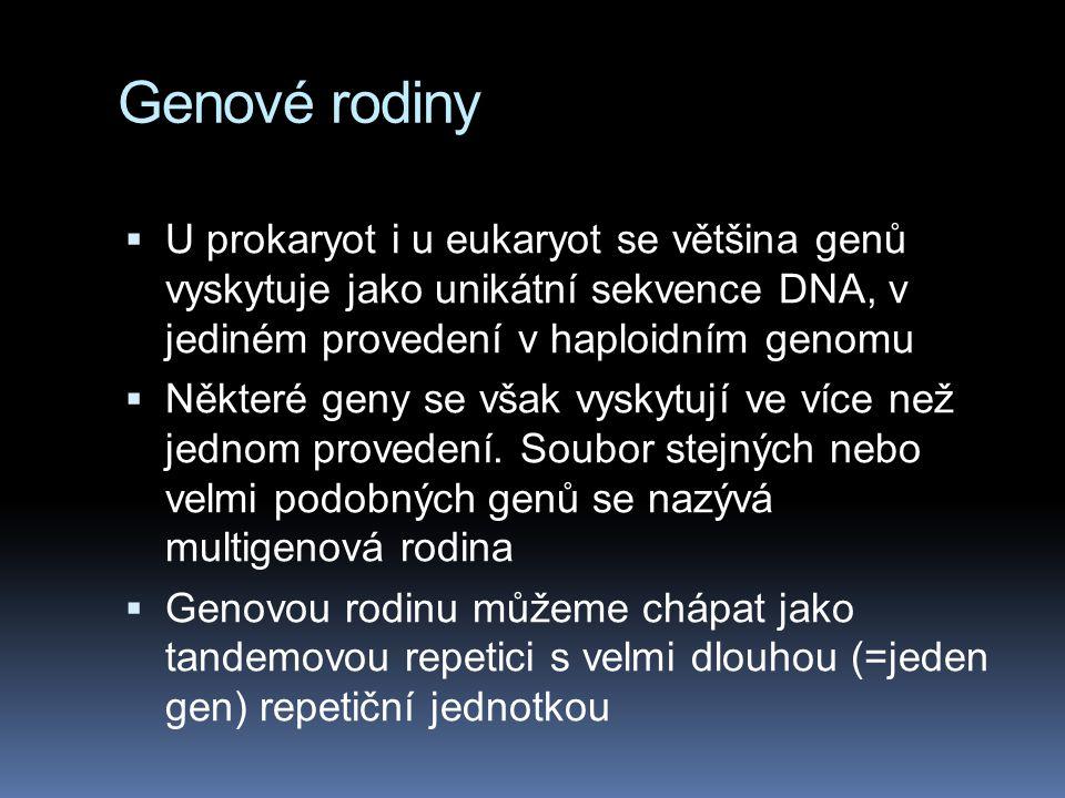Genové rodiny  U prokaryot i u eukaryot se většina genů vyskytuje jako unikátní sekvence DNA, v jediném provedení v haploidním genomu  Některé geny