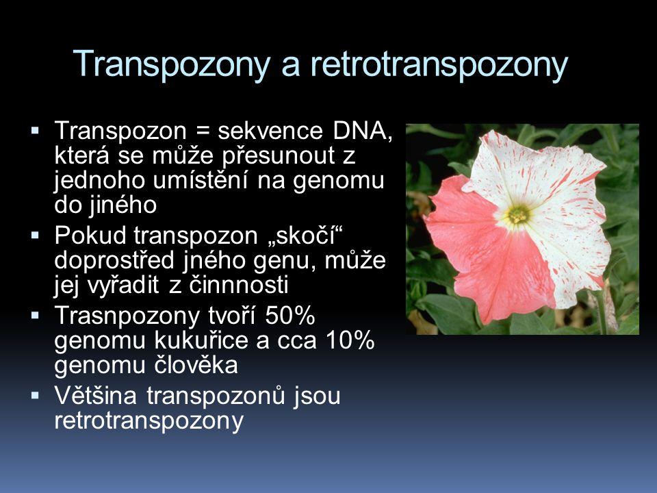 """Transpozony a retrotranspozony  Transpozon = sekvence DNA, která se může přesunout z jednoho umístění na genomu do jiného  Pokud transpozon """"skočí"""""""