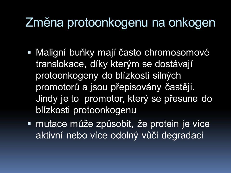  Maligní buňky mají často chromosomové translokace, díky kterým se dostávají protoonkogeny do blízkosti silných promotorů a jsou přepisovány častěji.