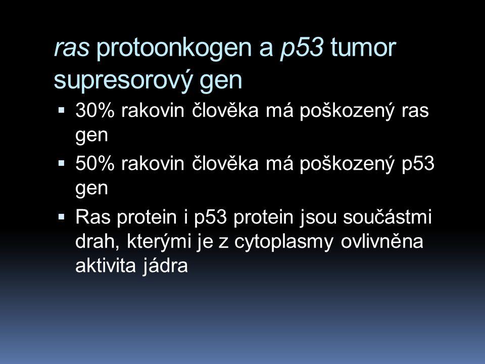 ras protoonkogen a p53 tumor supresorový gen  30% rakovin člověka má poškozený ras gen  50% rakovin člověka má poškozený p53 gen  Ras protein i p53