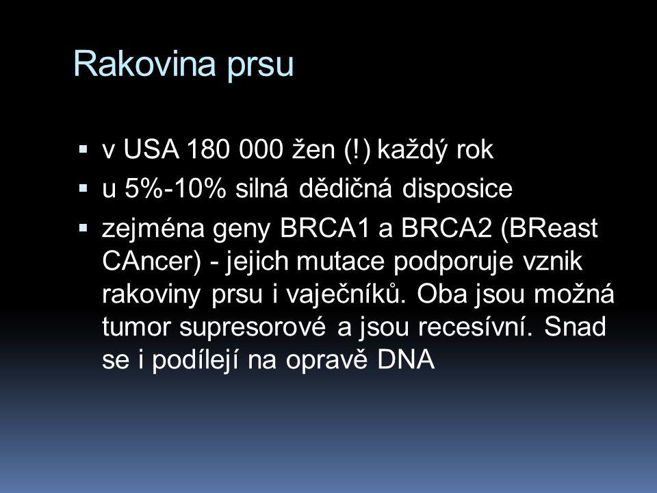 Rakovina prsu  v USA 180 000 žen (!) každý rok  u 5%-10% silná dědičná disposice  zejména geny BRCA1 a BRCA2 (BReast CAncer) - jejich mutace podpor