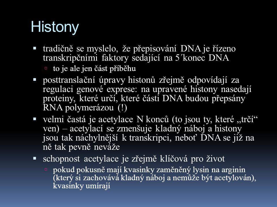 Histony  tradičně se myslelo, že přepisování DNA je řízeno transkripčními faktory sedající na 5´konec DNA  to je ale jen část příběhu  posttranslač