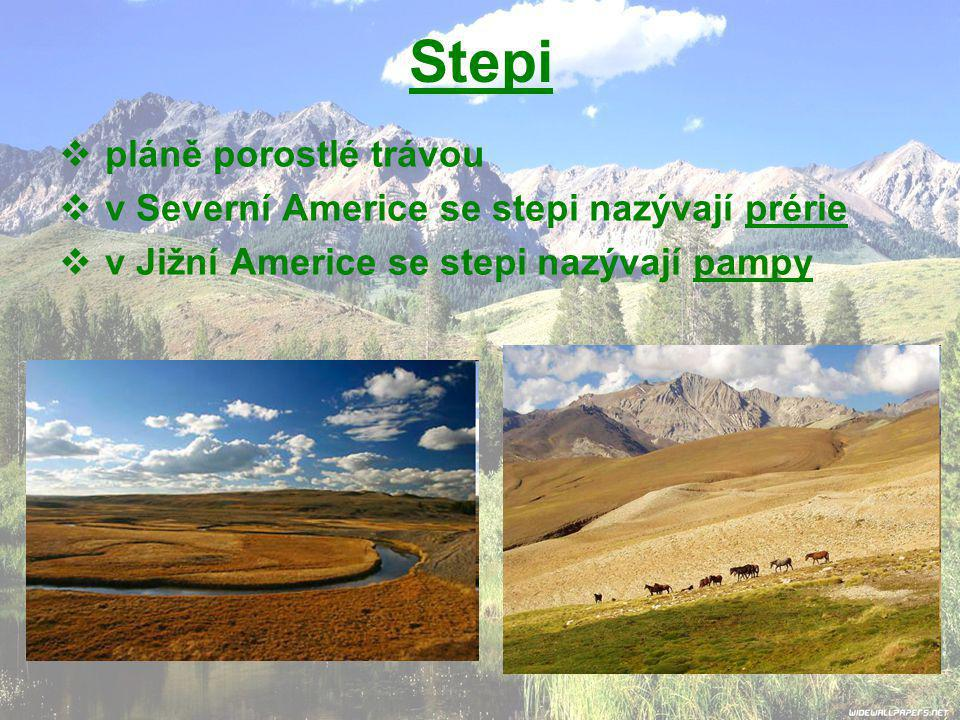 Stepi  pláně porostlé trávou  v Severní Americe se stepi nazývají prérie  v Jižní Americe se stepi nazývají pampy