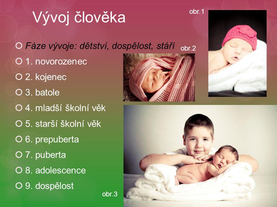 Vývoj člověka  Fáze vývoje: dětství, dospělost, stáří  1. novorozenec  2. kojenec  3. batole  4. mladší školní věk  5. starší školní věk  6. pr