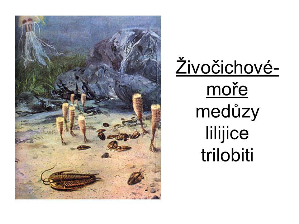 Živočichové- moře medůzy lilijice trilobiti