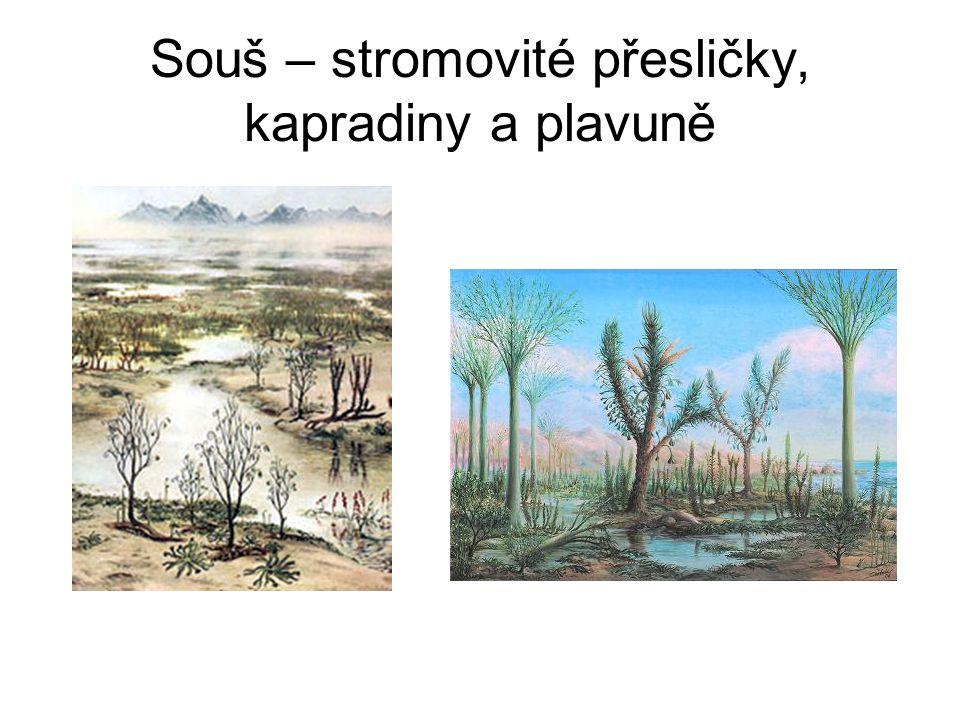 Souš – stromovité přesličky, kapradiny a plavuně