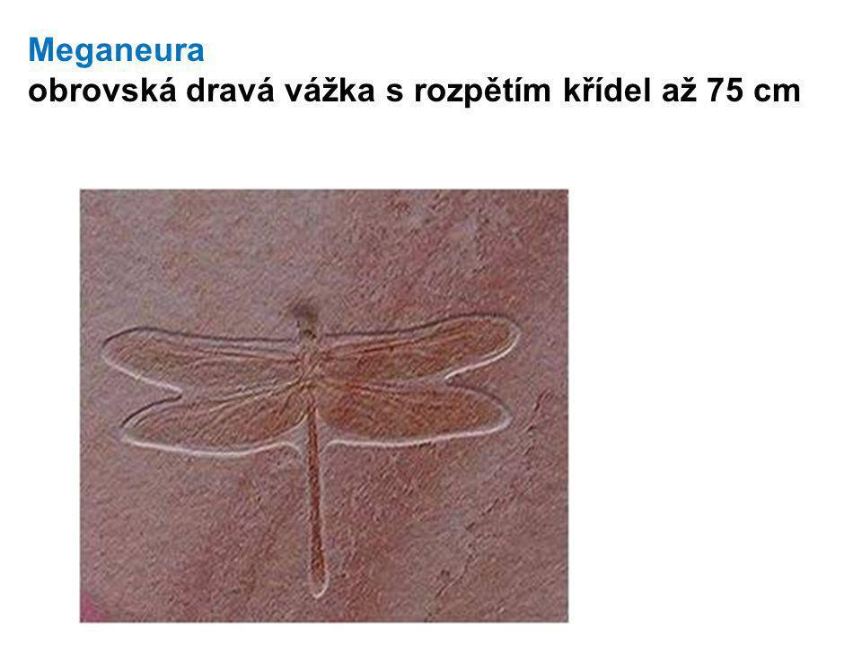 Meganeura obrovská dravá vážka s rozpětím křídel až 75 cm