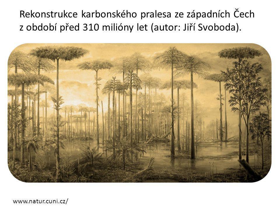 www.natur.cuni.cz/ Rekonstrukce karbonského pralesa ze západních Čech z období před 310 milióny let (autor: Jiří Svoboda).