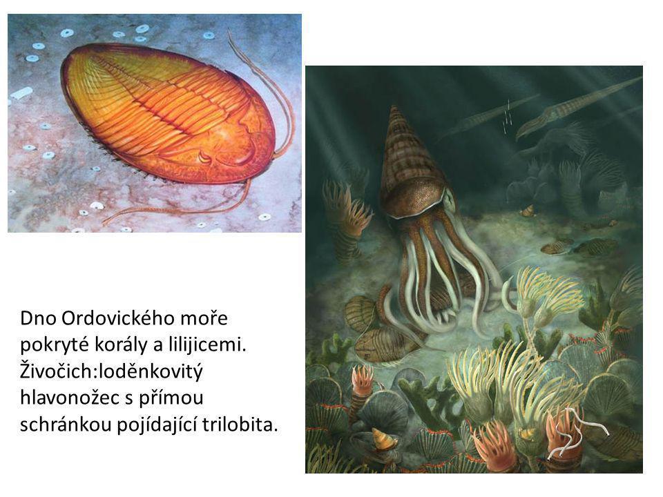 Dno Ordovického moře pokryté korály a lilijicemi.